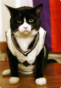 sweaters for cats the top 28 cat sweater designs photo gallery