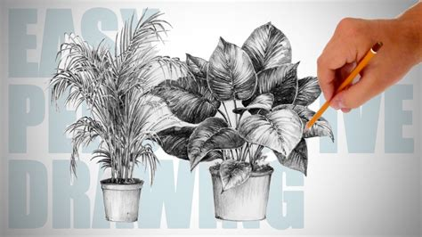 draw plants easy perspective drawing  youtube