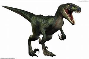 Velociraptor Facts for Kids, Students & Adults With ...  Velociraptor