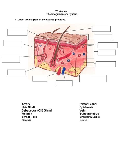 pictures skin diagram labeling quiz printable anatomy