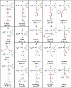 Biochemistry  Proteins  The Chemistry Of Proteins