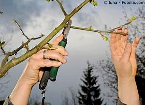 Wann Müssen Apfelbäume Geschnitten Werden : apfelbaum pflege pflanzen d ngen schnitt ~ Lizthompson.info Haus und Dekorationen