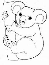 Koala Coloring Pages Printable Animal Animals Mycoloring Recommended sketch template