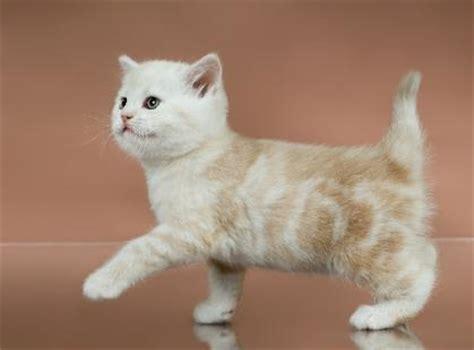 Kitten Names   LoveToKnow