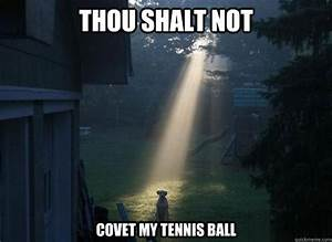 And on the sixth day he created fetch and it was good ...