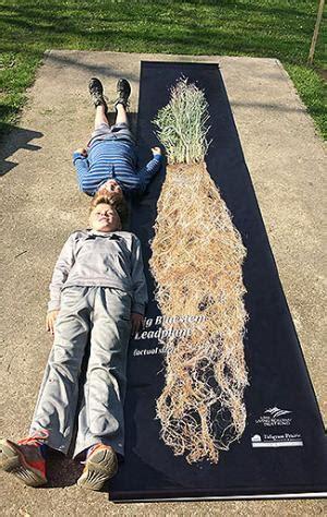 prairie roots banner tallgrass prairie center