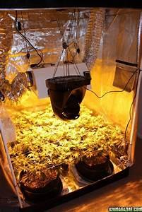 Growing Marijuana In Gorilla Grow Tents