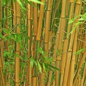 Bambus Vernichten Tipps : bambus pflanzen pflege und tipps mein sch ner garten ~ Whattoseeinmadrid.com Haus und Dekorationen