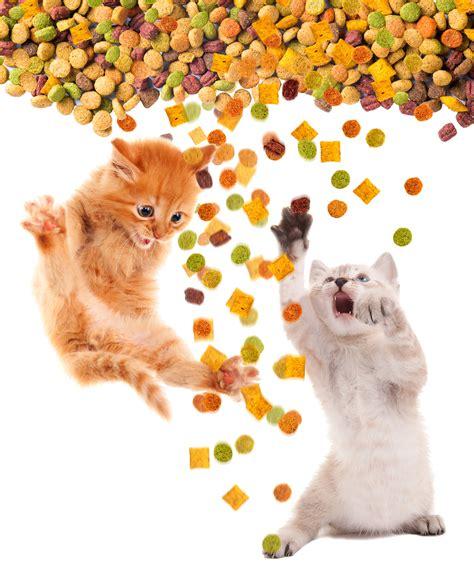 quantité de nourriture pour un chat par jour