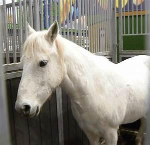 Weißer Schimmel Auf Blumenerde : mein sch ner wei er schimmel foto bild tiere haustiere pferde esel maultiere bilder ~ Eleganceandgraceweddings.com Haus und Dekorationen