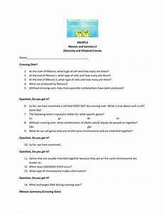 Worksheet  Meiosis Vocabulary Worksheet  Grass Fedjp