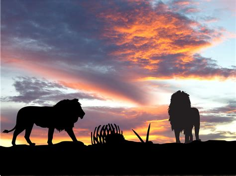 Animal Silhouette Wallpaper - lions africa silhouette sunset hd animals 4k wallpapers