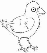 Crow Coloring Pages Printable Birds Animal Animals Coloringpages101 Sheets sketch template