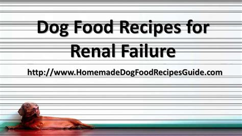 dog food recipes  renal failure youtube