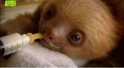Sloth Sloths Kawaii Adorable Funny Animal Happy