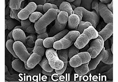 Cell Single Protein Technology