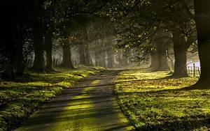 Nature, Landscape, Mist, Leaves, Green, Grass, Sunrise, Trees, Road, Sun, Rays, Sunlight