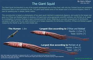 Giant Squid Size by Harry-the-Fox on DeviantArt