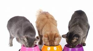 Online Bestellung Auf Rechnung : wo katzenfutter auf rechnung online kaufen bestellen ~ Themetempest.com Abrechnung
