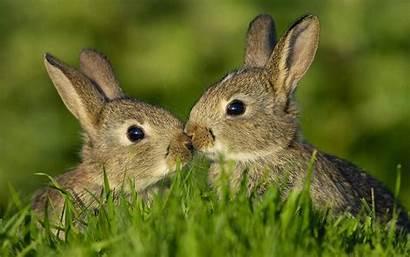 Bunny Wallpapers Rabbits Konijnen Desktop Poster Rabbit