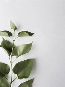 37 new ideas beige aesthetic wallpaper desktop зеленые