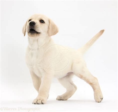 dog names popular male  female dog names pets world
