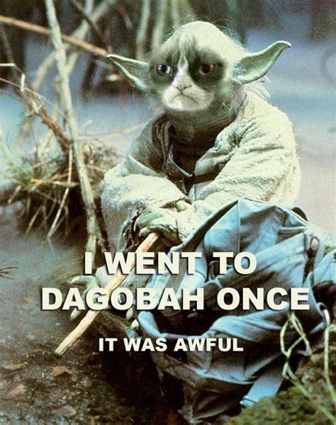 Hahaha Grumpy Cat Internet Meme Invades Star Wars Obis