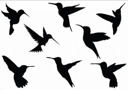 Clipart Hummingbird Silhouette Vector Clipartbest Bird Clip