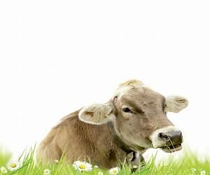 C Macredence Com : cr dence deco vaches c ~ Nature-et-papiers.com Idées de Décoration