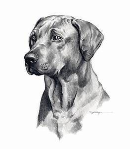 dog drawing | Cool Dog Art | Pinterest | Dog drawings ...