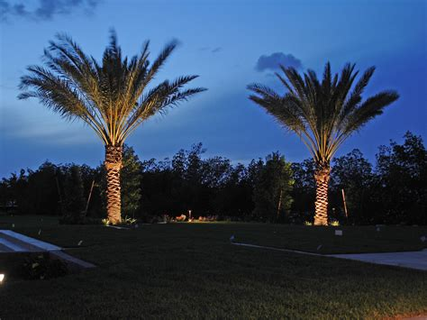 light up palm tree outdoor working together clearwater outdoor lighting installation