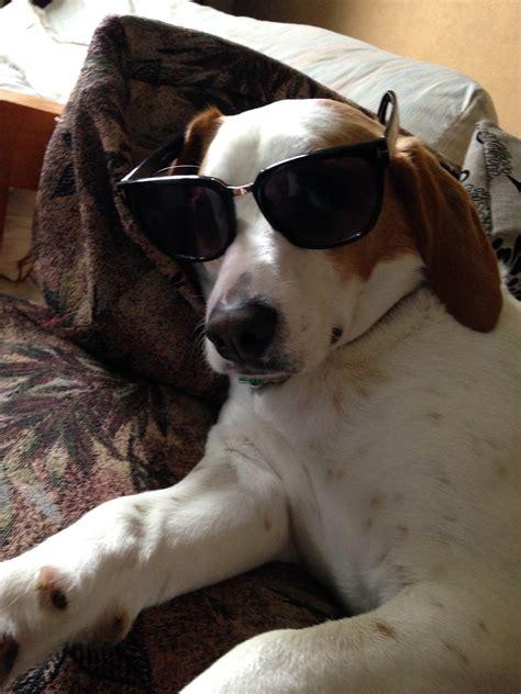 kong dog toy reviews  dog accessories chickadvisor