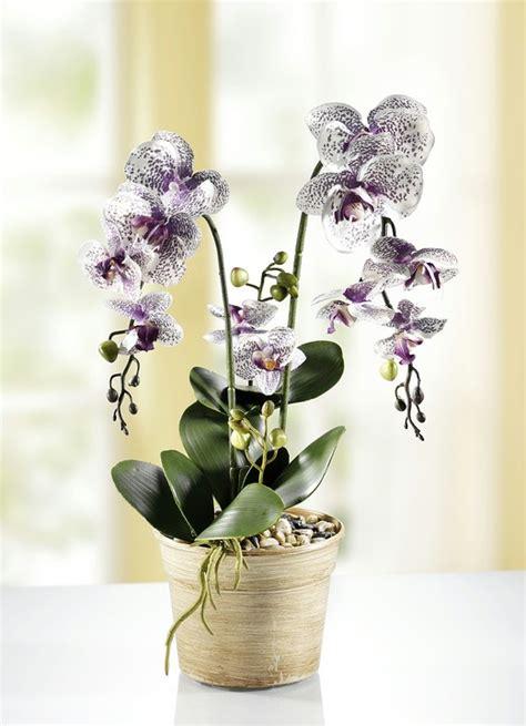 kunst orchidee im topf orchidee im topf kunst textilpflanzen bader