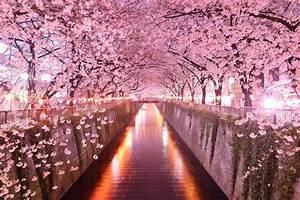 Wallpaper's Collection: «Sakura Wallpapers»