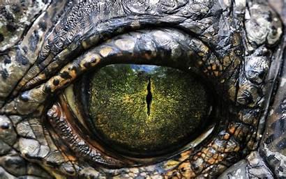 Dino Eye Dinosaurs Stare Android Dinosaur Eyes