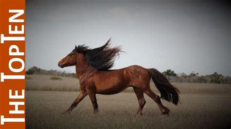horses most ten
