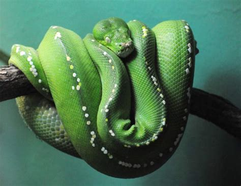 gambar binatang gambar ular