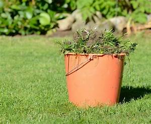 Comment Enlever Les Mauvaises Herbes : comment liminer les mauvaises herbes de votre jardin ~ Melissatoandfro.com Idées de Décoration