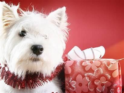 Christmas Dog Desktop Widescreen 1freewallpapers