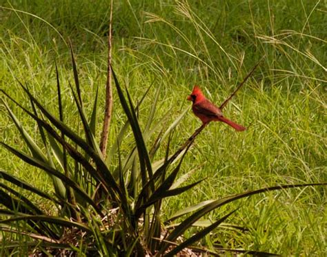 pictures of birds in the hill country of texas hill country bird pictures