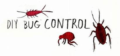 Common Household Bug Pests Guide Bugs Diy