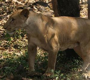 Safari - 1 - Picture of Sanjay Gandhi National Park ...