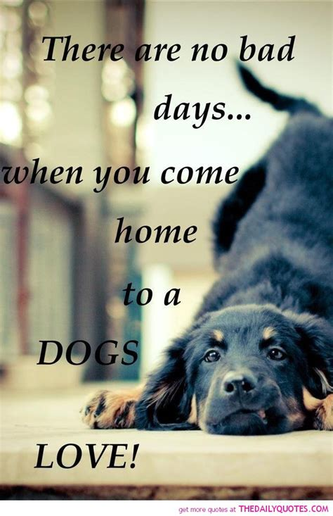 famous dog quotes love quotesgram