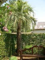 Jardin Des Plantes La Rochelle : butiagrus nabonnandi jardin des plantes la rochelle les galeries photo de plantes de ~ Melissatoandfro.com Idées de Décoration