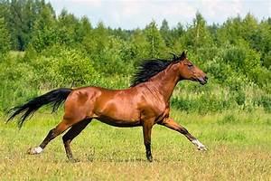Bilder Von Pferden : pferde bilder bilder von pferden pferdebilder fotos pferde ~ Frokenaadalensverden.com Haus und Dekorationen