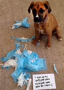 piper dog shame