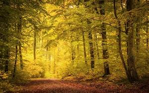Nature, Landscape, Fall, Path, Trees, Leaves, Mist, Sunlight, Wallpapers, Hd, Desktop, And, Mobile