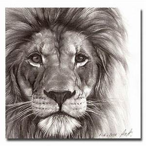 25+ Best Ideas about Lion Drawing on Pinterest | Lion art ...
