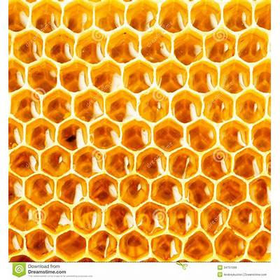 Honey in honeycomb closeup stock image. Image of beehive