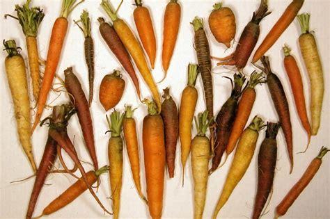 list of edible root list of root vegetables